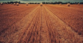 Зарабатываем на продаже зерна — 1 000 000 рублей в кармане!